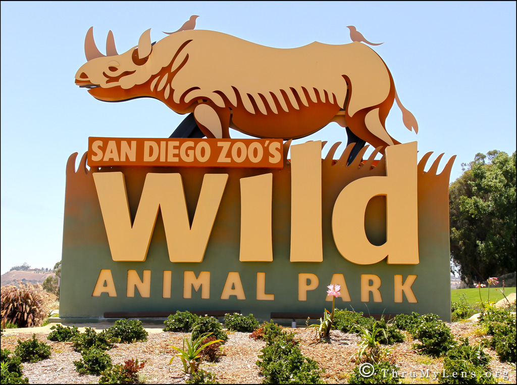 San diego wild animal park discounts coupons