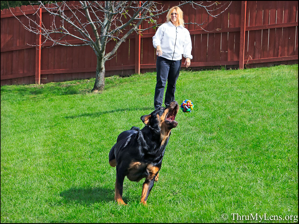 Yard Toys For Dogs : Backyard toys for dogs in the sun best outdoor